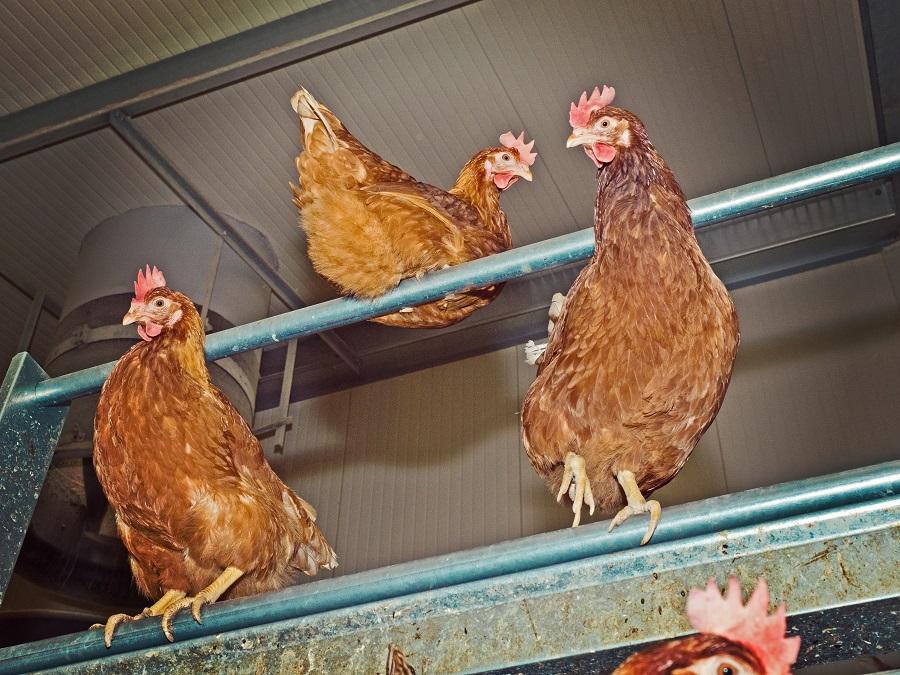 Frische Eiere aus Boden-und Freilandhaltung